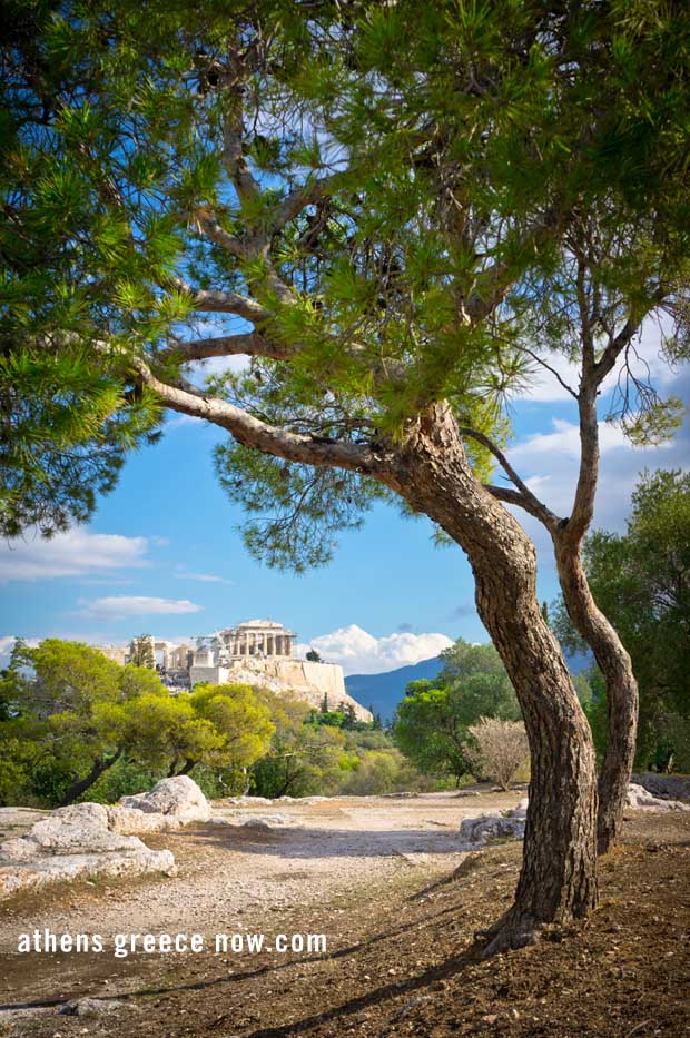 Tree with Acropolis background Athens Greece