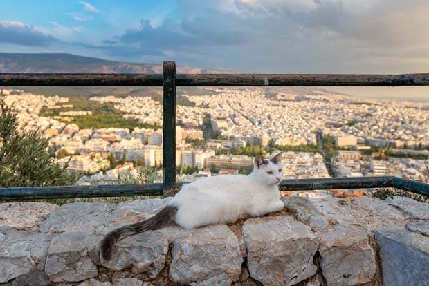 Cat at Lycabettus Greece
